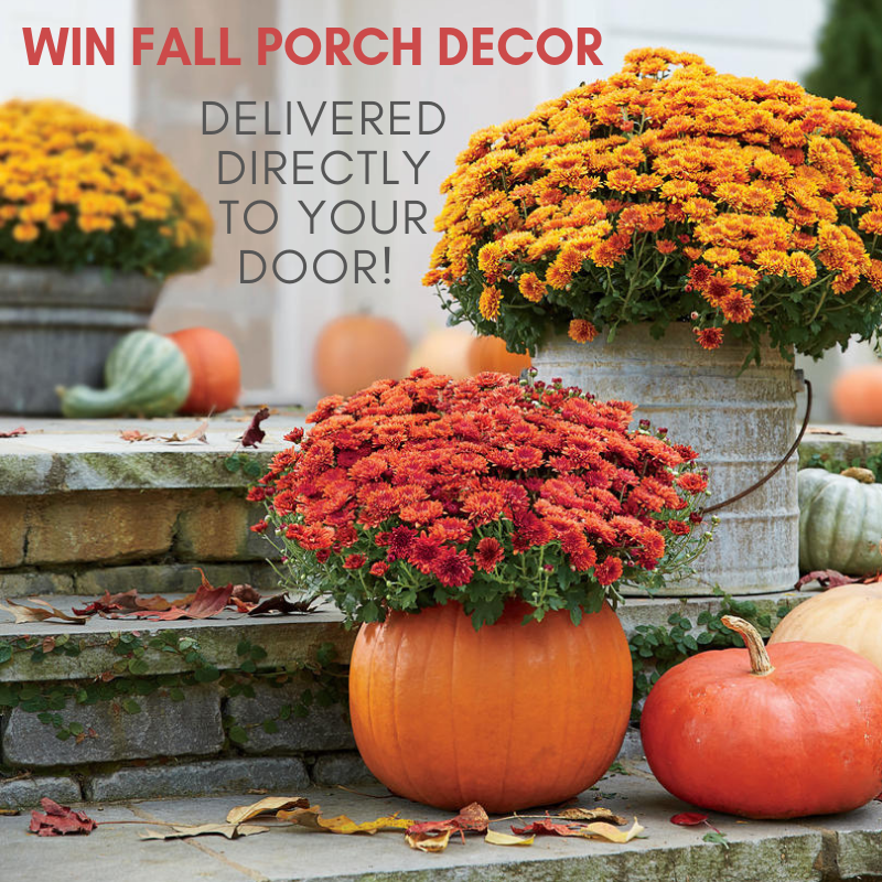 Enter Our Fall Giveaway!